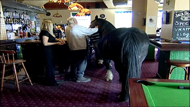 Carthorse becomes regular in Jarrrow pub ENGLAND North Tyneside Jarrow O'Malley's INT Penny the Carthorse stood at bar Close up of barmaid serving...