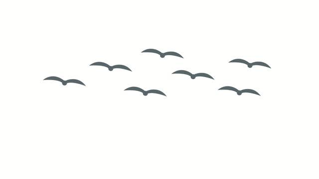 cartoon flock of flying birds animation - seagull stock videos & royalty-free footage