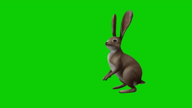 cartoon rabbit on chroma and with alpha channel - full length stock videos & royalty-free footage
