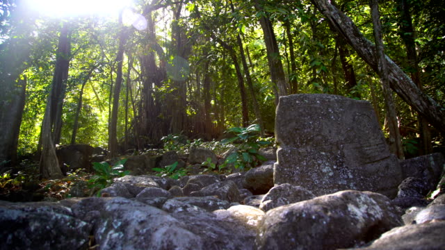 carved petroglyph stone ruins sacred banyan tree marquesas - tropical tree stock videos & royalty-free footage