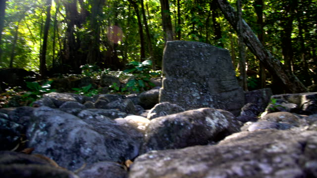 carved stone petroglyph ruins sacred banyan tree marquesas - tropical tree stock videos & royalty-free footage