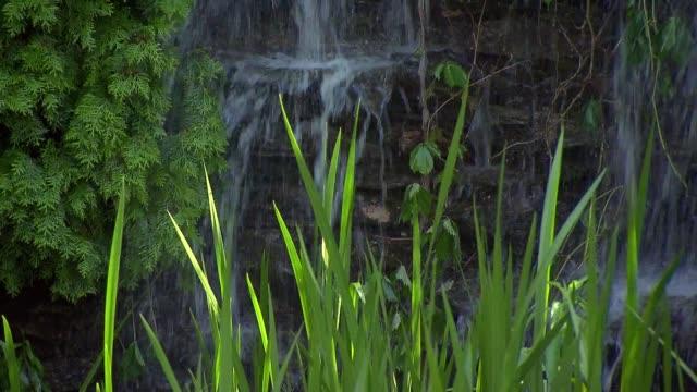 cascade in garden - vattenfall fallande vatten bildbanksvideor och videomaterial från bakom kulisserna