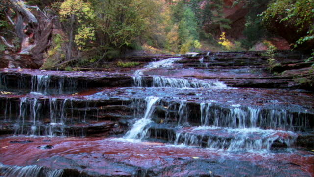 ms, td, cascade on forest stream, zion national park, utah, usa - zion national park stock videos & royalty-free footage