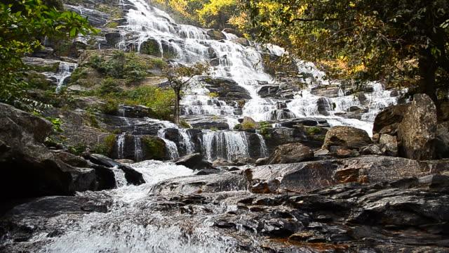 vídeos y material grabado en eventos de stock de cascade cascadas rainforests tropical - árbol tropical