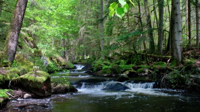 vídeos y material grabado en eventos de stock de flujo en cascada en spring forest - riachuelo