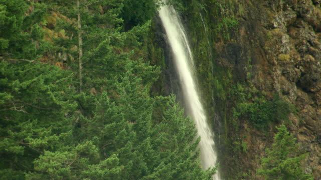 vídeos y material grabado en eventos de stock de ms aerial cascading water amid evergreen trees at multnomah falls / oregon, united states - cascadas de multnomah