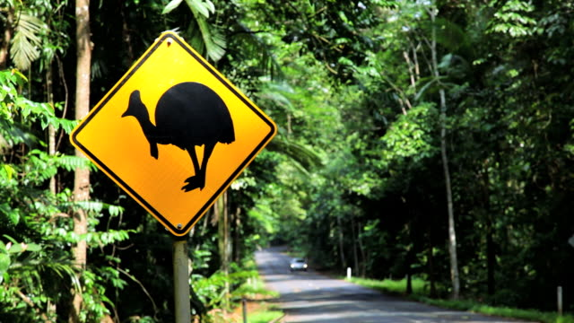 cassowary crossing sign for a native bird of daintree national park nr cairns, queensland, australia - animal crossing sign stock videos & royalty-free footage
