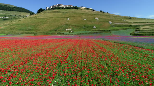 castelluccio di norcia in spring, italy - valley stock videos & royalty-free footage