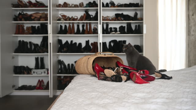 vídeos de stock e filmes b-roll de cat alone on bed worth many shoes in large wardrobe - coleta seletiva