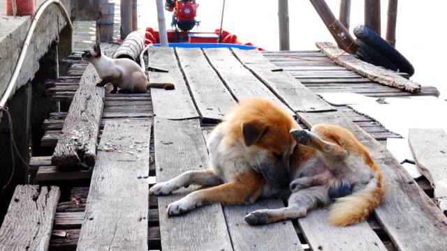 Katzen- und eine goldene an der Pier alte Holz Brücke