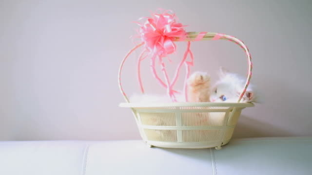 cat and basket - ball of wool stock videos & royalty-free footage