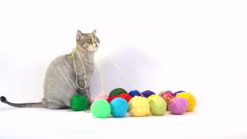 vídeos y material grabado en eventos de stock de gato y lana de color madeja en cesta de la ropa sucia - cordel