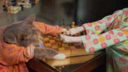 cat and dog play chess together in dresses and get in fight over winner