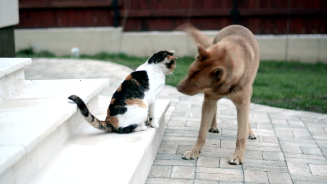 cat and dog playing in the yard - dog stock videos & royalty-free footage