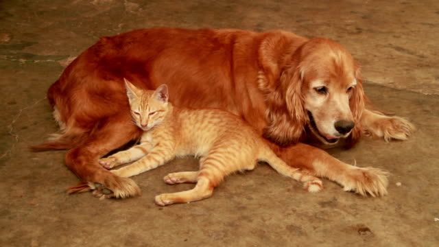 cat and dog - dog and cat stock videos and b-roll footage