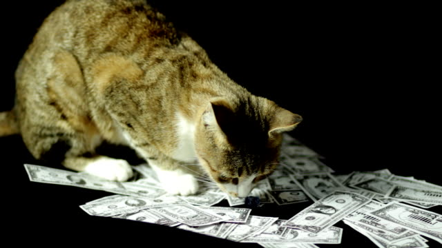 Cat and the money