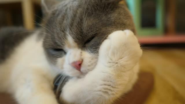 cat animal pet life - blue dog stock videos & royalty-free footage