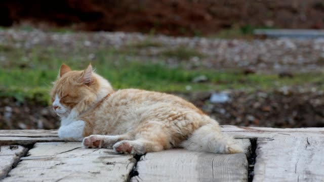 cat at ephesus ancient city in selcuk, turkey - history stock videos & royalty-free footage