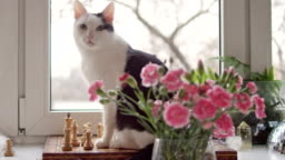 Cat at windowsill