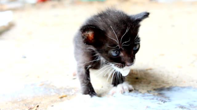 Cat Baby Milk HD