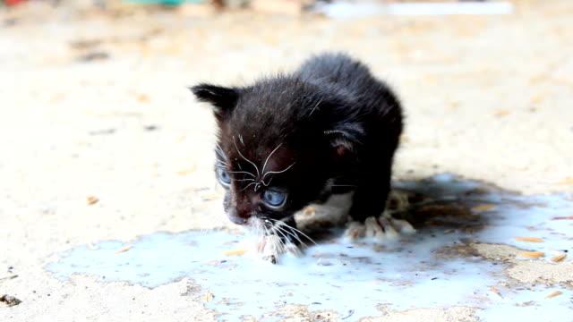 cat baby milk hd - skimboarding stock videos & royalty-free footage
