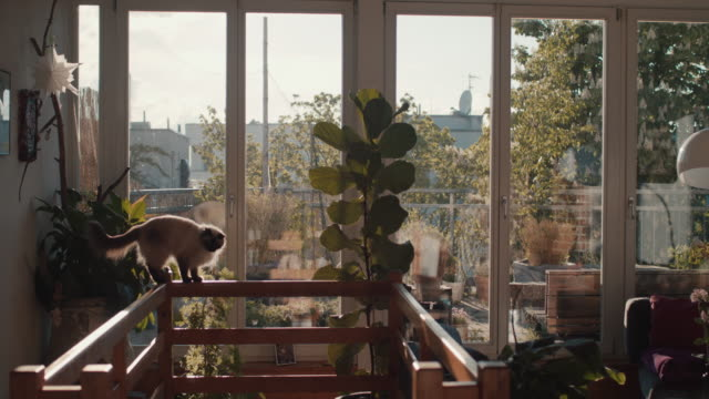 cat balancing on banister in berlin loft with roof garden - living room stock videos & royalty-free footage