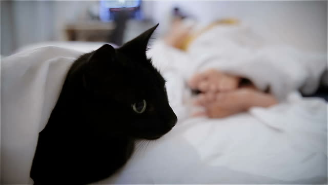 Cat bodyguard,in bed with my owner