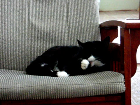 cat cleaning itself - chair stock videos and b-roll footage