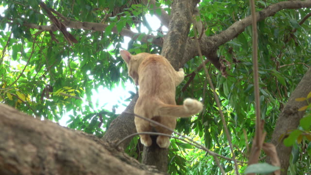 cat climbing down from a tree - zona arborea video stock e b–roll
