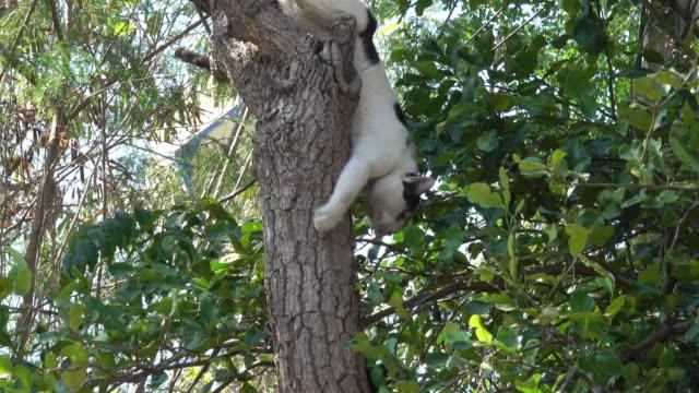 Katze von einem Baum nach unten klettern