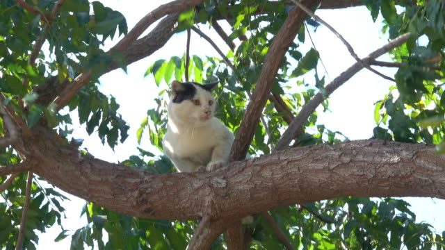 Cat climbing on a tree