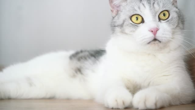 cat cute, cat cleaning - brightly lit stock videos & royalty-free footage