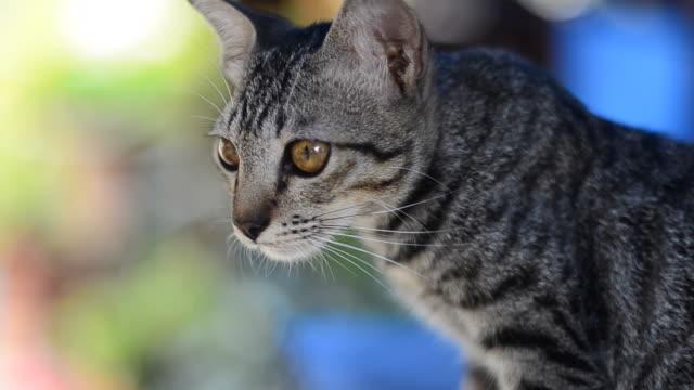 cat かわいいペットをご同伴いただけます。 - 雑種のネコ点の映像素材/bロール