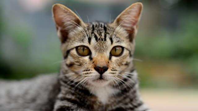 Kat-schattige huisdieren