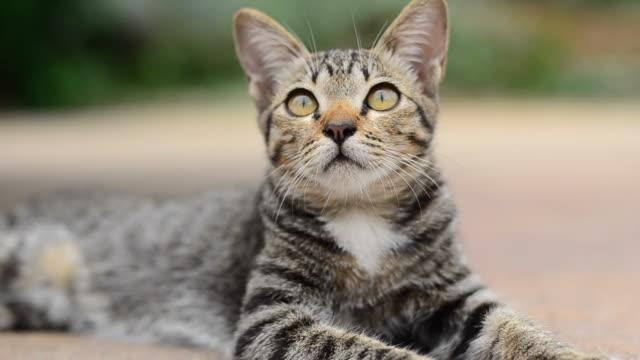 Cat cute pets .