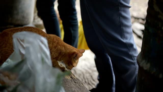かわいいペットの猫 - 雑種のネコ点の映像素材/bロール