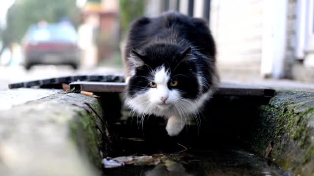 猫の飲料水。 - 動物の頭点の映像素材/bロール