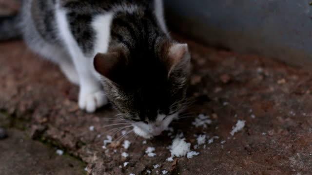 cat 食べるのお料理 - 雑種のネコ点の映像素材/bロール