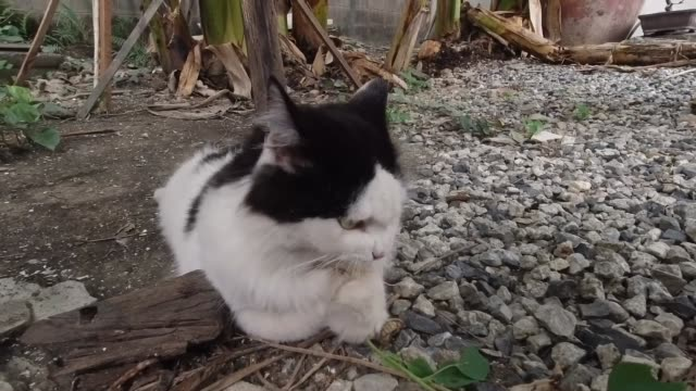 cat eating the root of indian nettle plants - nettle stock videos & royalty-free footage
