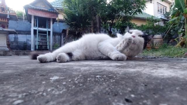 vídeos de stock, filmes e b-roll de gato que come a raiz de plantas indianas da urtiga - nettle