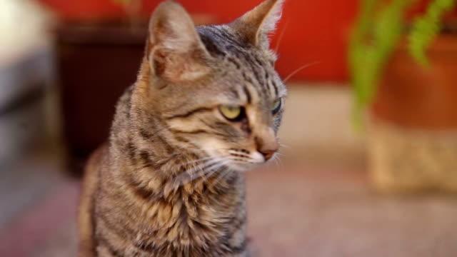 Kat gezicht close-up