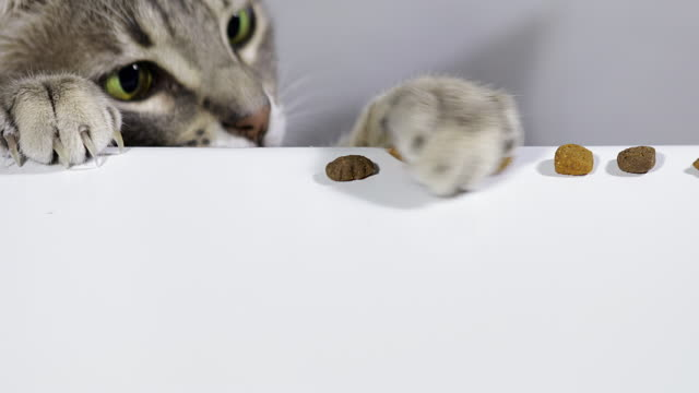 cat grabbing food - five objects stock videos & royalty-free footage
