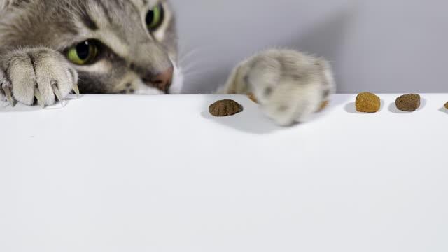cat grabbing food - fünf gegenstände stock-videos und b-roll-filmmaterial