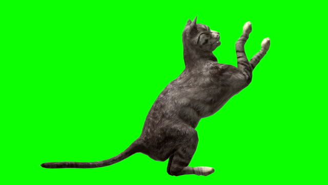 cat green screen (loopable) - green background stock videos & royalty-free footage
