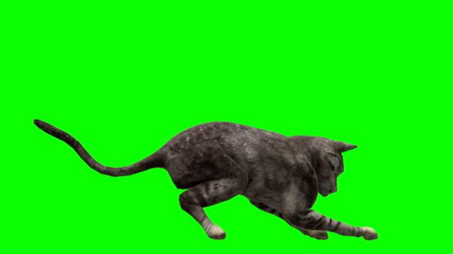 Cat Green Screen (Loopable)