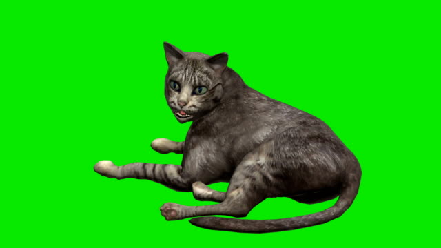 cat green screen (loopable) - digital animation stock videos & royalty-free footage