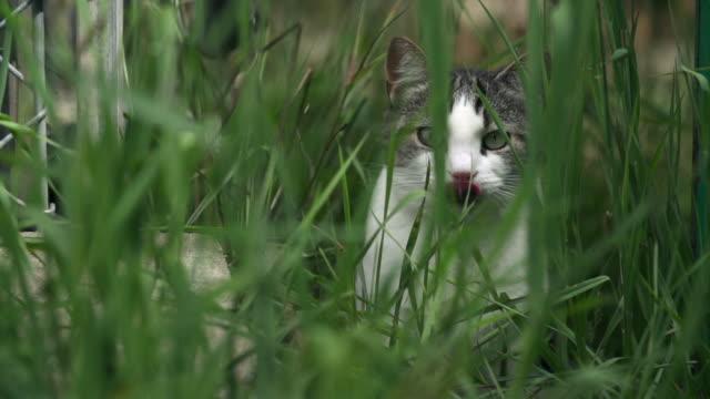 Cat hiding in tall grass