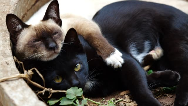 cat hugging - two animals video stock e b–roll