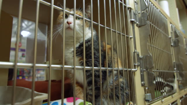 Cat in a cage, animal shelter