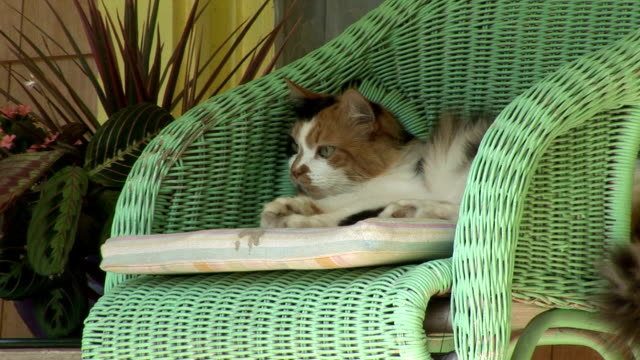 cat in a chair, front porch
